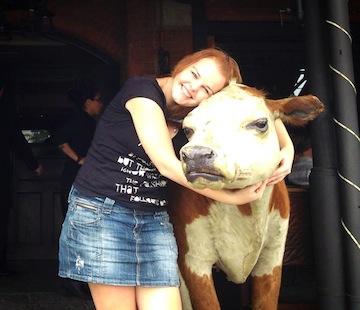 Kráva v Buenos Aires